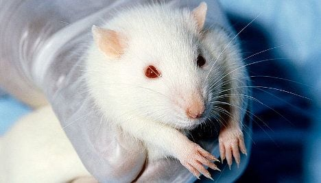 Animals used for Swiss cosmetics tests