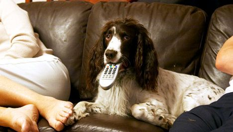 Nestle tempts dogs with high frequency TV ads