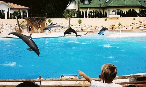 Drugs caused dolphins' deaths: prosecutor