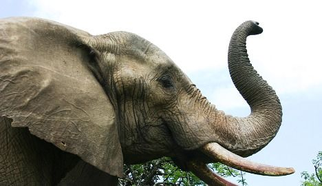 Swiss circus forces chubby elephants to diet