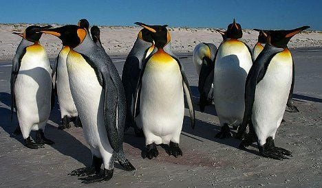 Penguins get stressed by humans: Swiss study