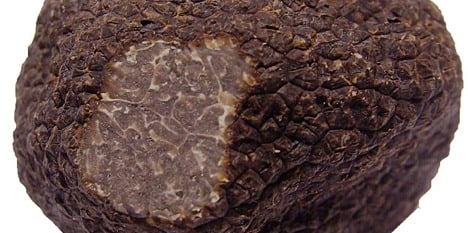 Boffins paint rosy future for Swiss truffles