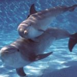 Conny-Land head says workers killed dolphins