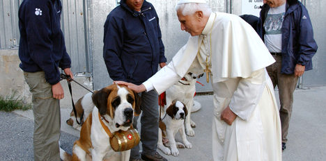 Dogs and cats 'still eaten in Switzerland'