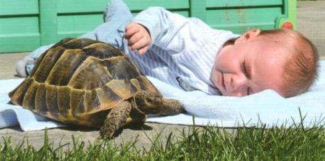 Ticino tortoises at risk from warm weather