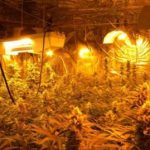 Pot growers hoard cache of illegal weapons