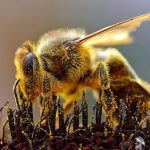 Syngenta rejects claims of pesticide bee deaths