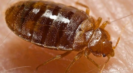 Bed bugs attack Swiss army school recruits