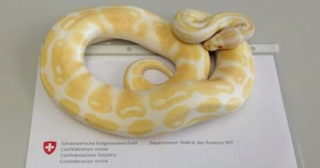 Border guards seize pythons at French border