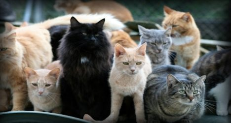 Stray cat hunting ban rejected by Swiss MPs