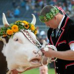 Newly-crowned Matthias Sempach holds the prize bull awarded to the wrestling competition winnerPhoto: Photo: Monika Flueckiger/swiss-image.ch