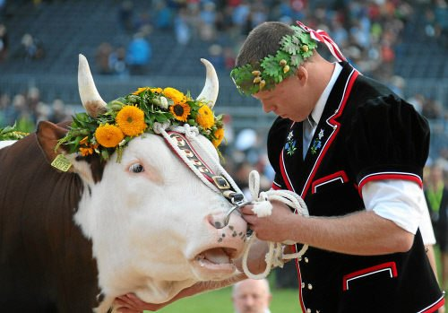 In pictures: Swiss wrestling king crowned at 'Schwingfest'