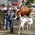Village fetes cows' descent from Swiss Alps