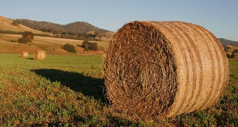 Senior crushed to death by hay bales on farm