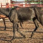 Chain pulls horsemeat after new cruelty charges