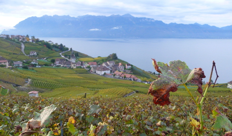Swiss drink more homegrown wine