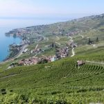 More protection sought for Lavaux vineyards