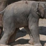 Zoo launches contest to name baby elephant