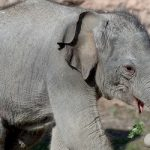Smile: Zurich Zoo's baby elephant is named