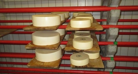 Thieves steal 1.3 tonnes of infected cheese
