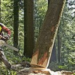 Wood volume expands in Swiss forests: report