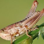Insects proposed for sale in Swiss supermarkets