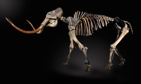 Ancient mammoth remains found in Zug
