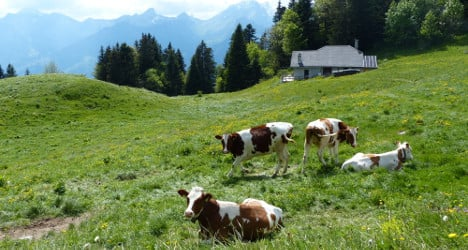 Swiss army ends 31-day cow rescue mission