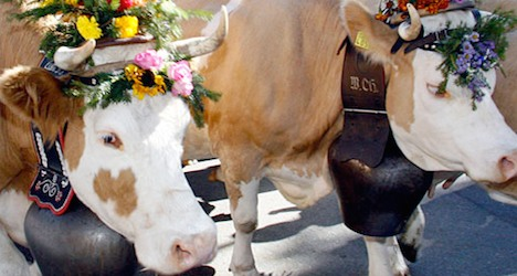 Cow bells ordered off after noise complaints