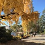 Indian summer settles over Swiss cantons