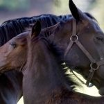 Zoophile abuse of horses decried by legal group