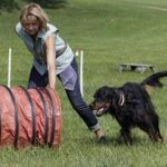Courses for dog owners may be scrapped