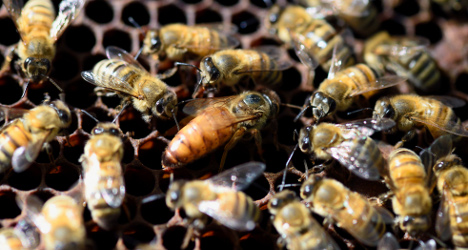 Mystery killer wipes out half a million Swiss bees