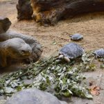 Gallery: giant tortoise at Zurich Zoo is mother at 80