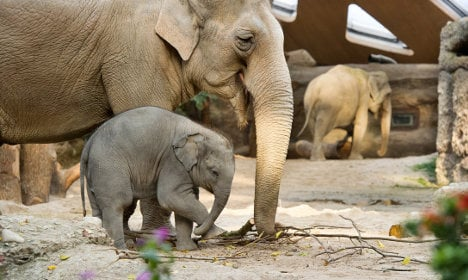 Zurich Zoo mourns death of Druk the elephant