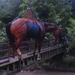 In pictures: horses rescued in Swiss river emergencies