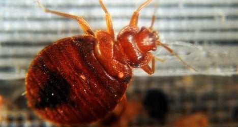 Bed bug attack puts Swiss soldiers in 'quarantine'