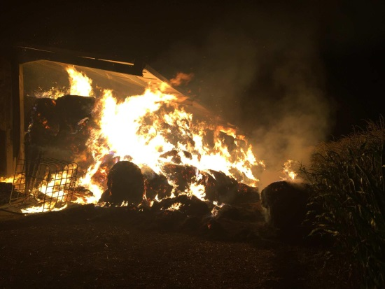 Fifty cows dead after fires ravage two Swiss farm buildings