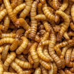 Coop's bug burgers delayed due to lack of available insects