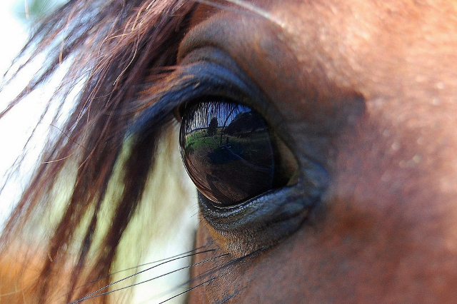 Swiss police arrest animal breeder after shocking photos show mistreated horses