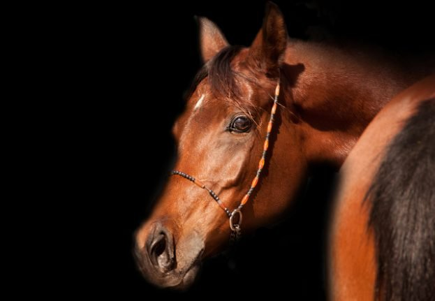 Thurgau's rescued horses to be put on public sale this week
