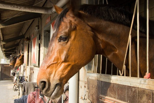 Swiss army recruits look after mistreated horses seized from Thurgau farm