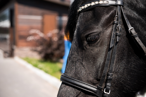 Thurgau's rescued horses sold at auction