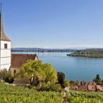 Thieves steal 700 kilos of grapes from Swiss vineyard