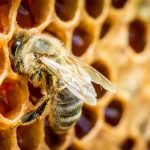 Swiss study says bee-harming pesticides present in 75 percent of honey worldwide