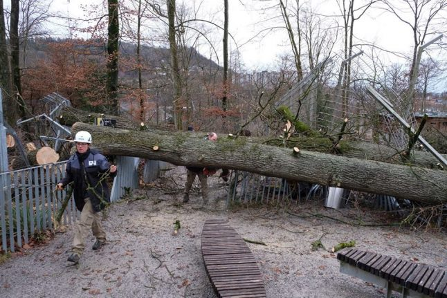 Insurers count the cost as clear-up begins after storm