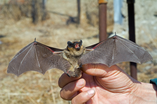 Swiss couple given all-clear after contact with rabid bat