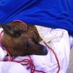 Dog reported missing in Frankfurt turns up six months later near Zurich