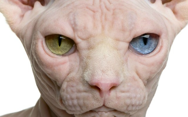 Coming soon to an internet near you: Switzerland's creepy 'naked cat'