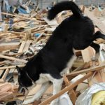 Swiss scientists develop new 'electronic rescue dog'